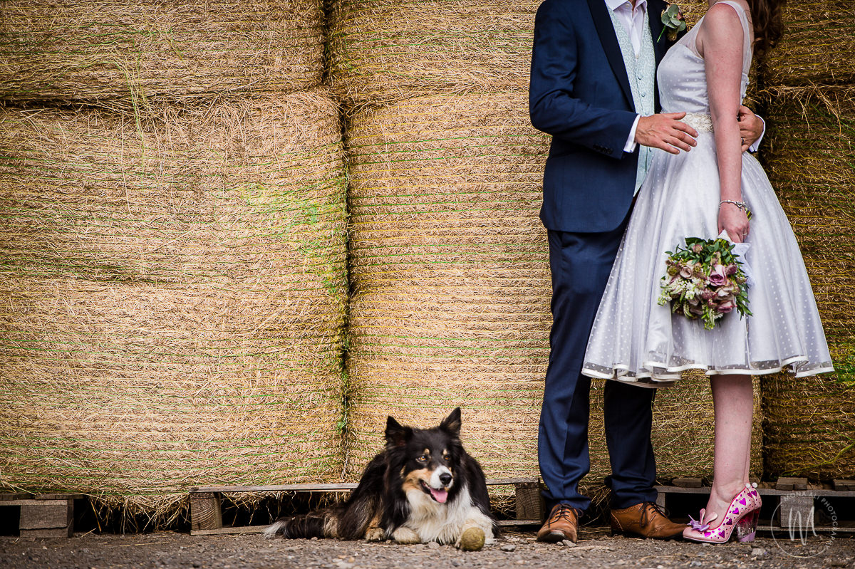 Dogs at Weddings - Sussex Wedding Photographer